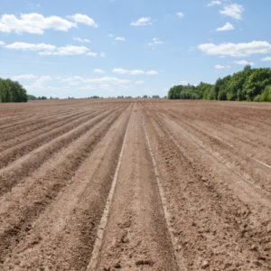 Brony w rolnictwie